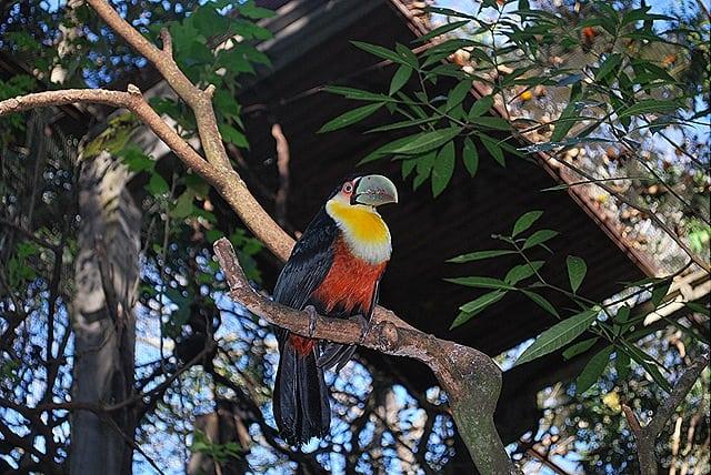 DSC 0492 - Roteiro de 5 dias em Foz do Iguaçu