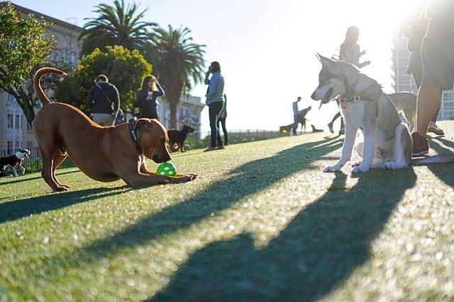 """california com pets - Roteiro """"pet friendly"""" de 4 dias pelo norte da Califórnia"""
