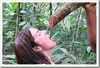 Caminhadanamata280412Manaus278 3629x2419 thumb - Roteiro de 5 dias na Amazônia
