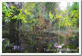 IMG 6770 3629x2419 thumb - Roteiro de 5 dias na Amazônia