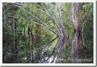 Selva Amazônica