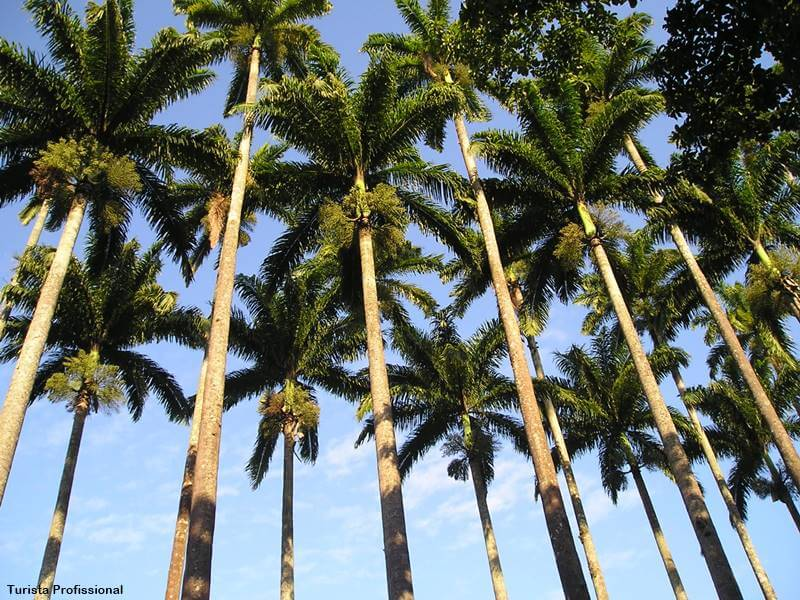 Jardim botanico do rio de janeiro - Jardim Botânico do Rio de Janeiro: a joia verde da cidade