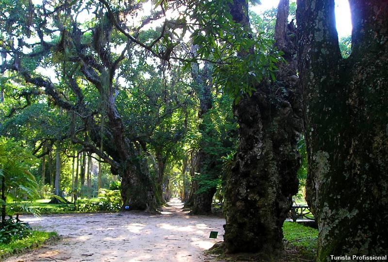 como chegar ao jardim botanico rj - Jardim Botânico do Rio de Janeiro: a joia verde da cidade