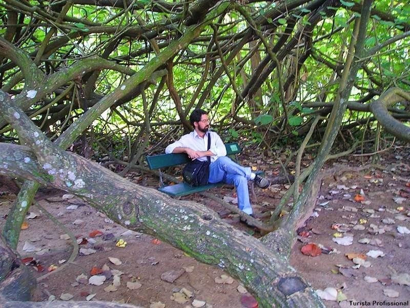jbrj turista profissional - Jardim Botânico do Rio de Janeiro: a joia verde da cidade