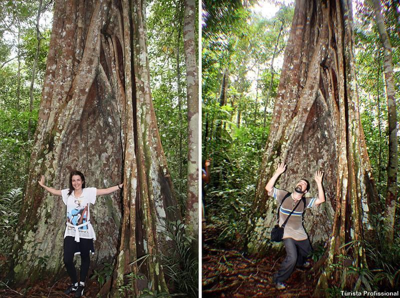 árvores da Amazônia