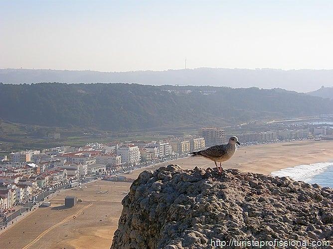 Nazar Portugal 63 - Nazaré, Portugal: ondas gigantes e tradição portuguesa