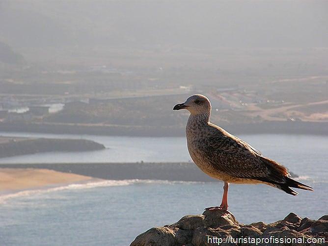 Nazar Portugal 66 - Nazaré, Portugal: ondas gigantes e tradição portuguesa