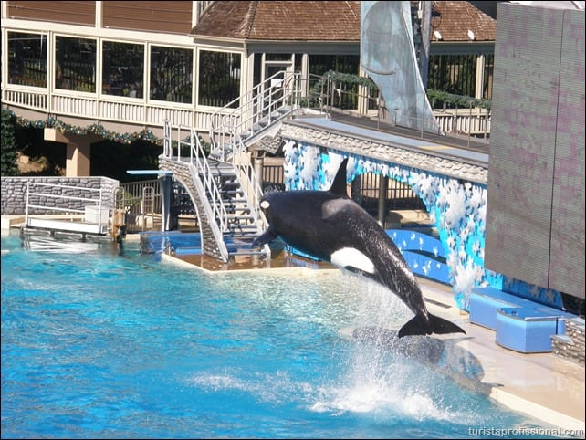 P1020085 - Visitando o SeaWorld de San Diego
