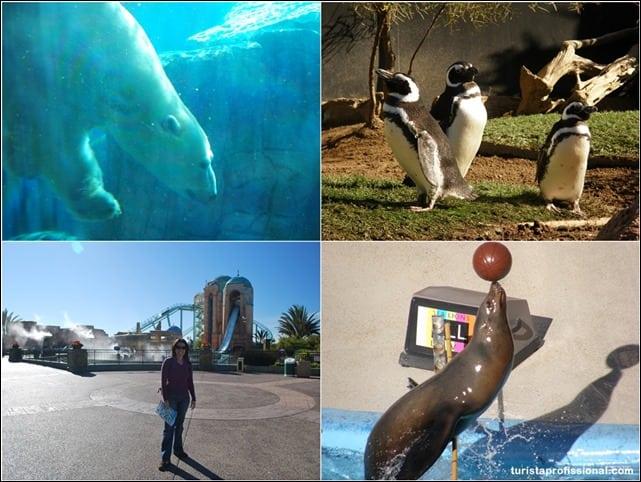 SeaWorld - Visitando o SeaWorld de San Diego