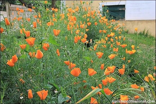 IMG 0093 - Primavera em Portugal - olhares