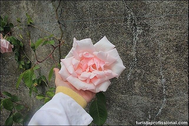 IMG 0524 - Primavera em Portugal - olhares