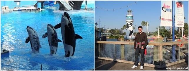 SeaWorld - Lua de Mel na Disney da Flórida