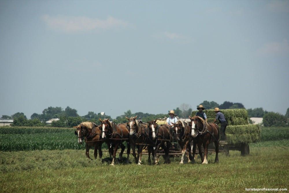 IMG 9446 - O dia em que vi um Amish pela primeira vez!