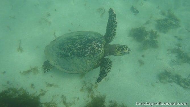 DSC09182 - O que fazer em Fernando de Noronha - Ilha Tour