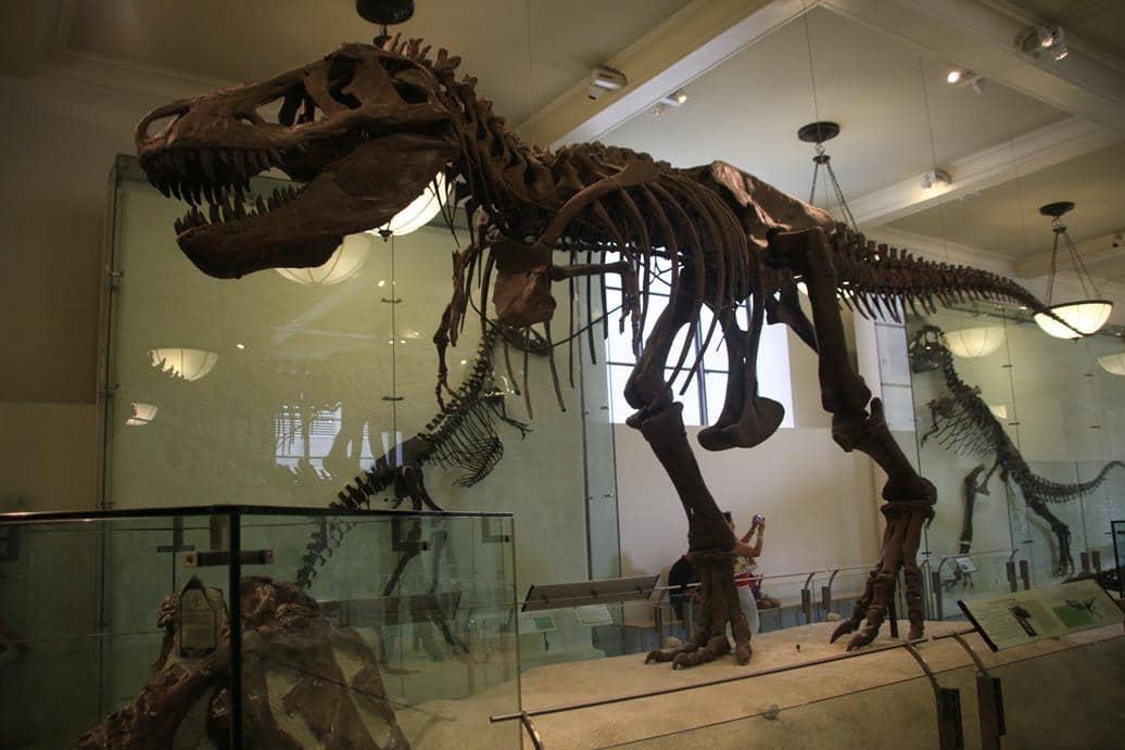Museu História Natural de Nova York 10 - Museu de História Natural de Nova York: boa opção para viagem com crianças