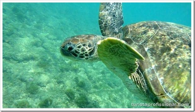 Olhares Fernando de Noronha um mundo embaixo dgua 10 - Fernando de Noronha: um mundo embaixo d'água