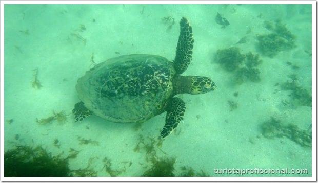 Olhares Fernando de Noronha um mundo embaixo dgua 11 - Fernando de Noronha: um mundo embaixo d'água