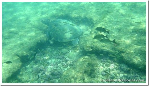 Olhares Fernando de Noronha um mundo embaixo dgua 12 - Fernando de Noronha: um mundo embaixo d'água