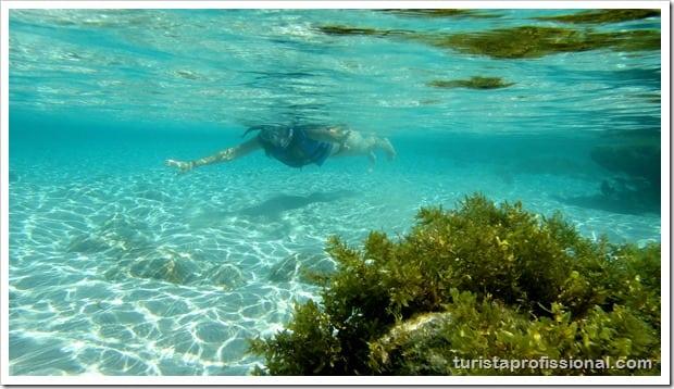 Olhares Fernando de Noronha um mundo embaixo dgua 14 - Fernando de Noronha: um mundo embaixo d'água