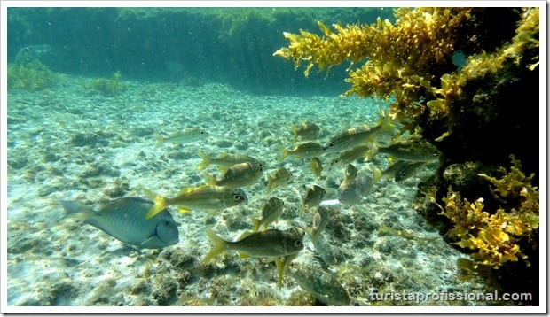 Olhares Fernando de Noronha um mundo embaixo dgua 16 - Fernando de Noronha: um mundo embaixo d'água