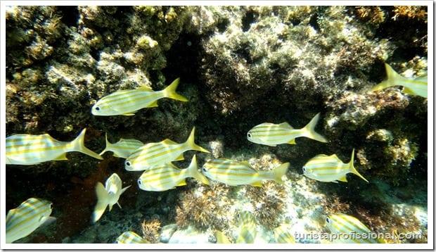 Olhares Fernando de Noronha um mundo embaixo dgua 19 - Fernando de Noronha: um mundo embaixo d'água