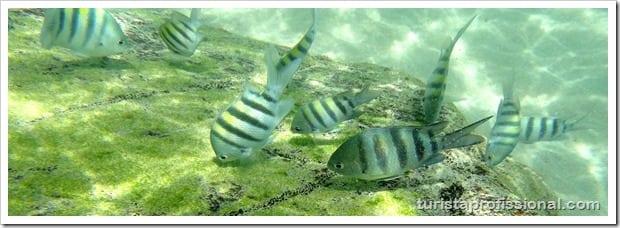 Olhares Fernando de Noronha um mundo embaixo dgua 2 - Fernando de Noronha: um mundo embaixo d'água