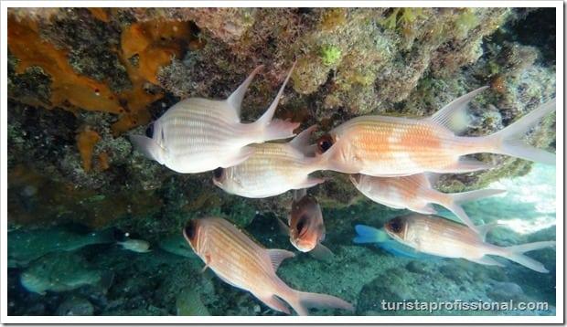 Olhares Fernando de Noronha um mundo embaixo dgua 20 - Fernando de Noronha: um mundo embaixo d'água