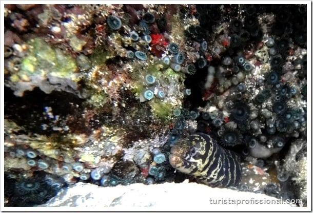 Olhares Fernando de Noronha um mundo embaixo dgua 23 - Fernando de Noronha: um mundo embaixo d'água