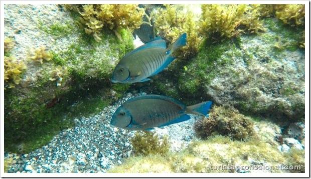 Olhares Fernando de Noronha um mundo embaixo dgua 24 - Fernando de Noronha: um mundo embaixo d'água