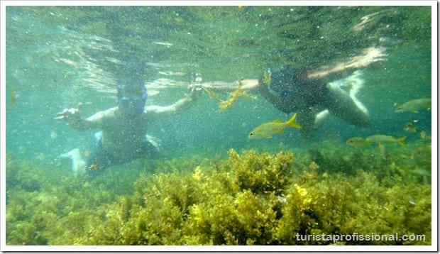 Olhares Fernando de Noronha um mundo embaixo dgua 25 - Fernando de Noronha: um mundo embaixo d'água