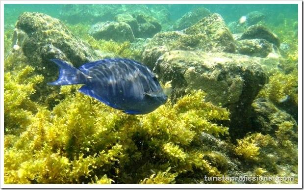 Olhares Fernando de Noronha um mundo embaixo dgua 26 - Fernando de Noronha: um mundo embaixo d'água