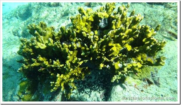 Olhares Fernando de Noronha um mundo embaixo dgua 8 - Fernando de Noronha: um mundo embaixo d'água