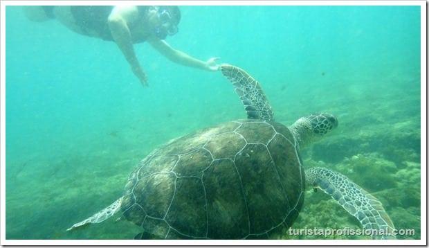 Olhares Fernando de Noronha um mundo embaixo dgua 9 - Fernando de Noronha: um mundo embaixo d'água