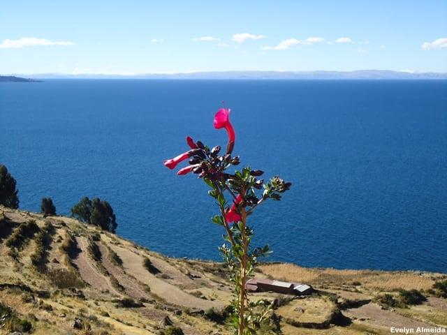 Vista da Bolívia - Roteiro de 10 dias pelo Peru com criança: Lago Titicaca