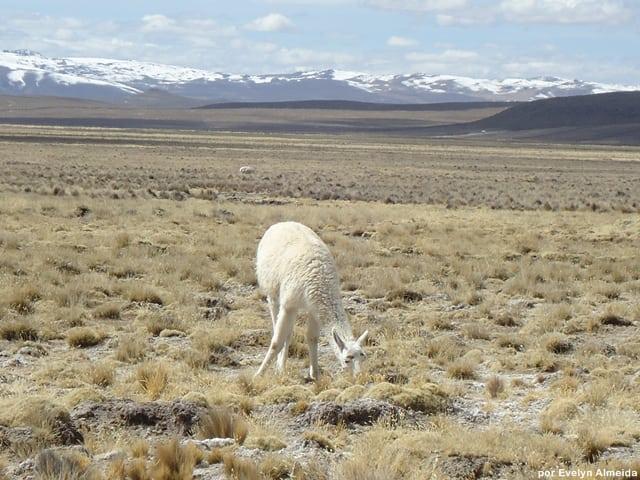 roteiro Peru - Roteiro de viagem pelo Peru com criança: Vale do Colca
