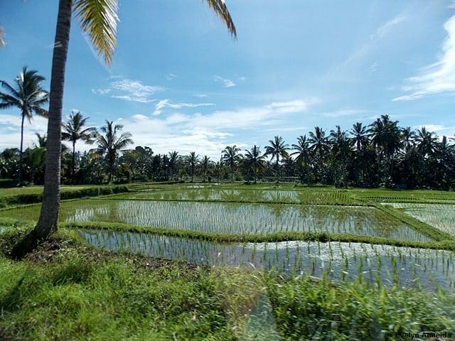 dicas Bali