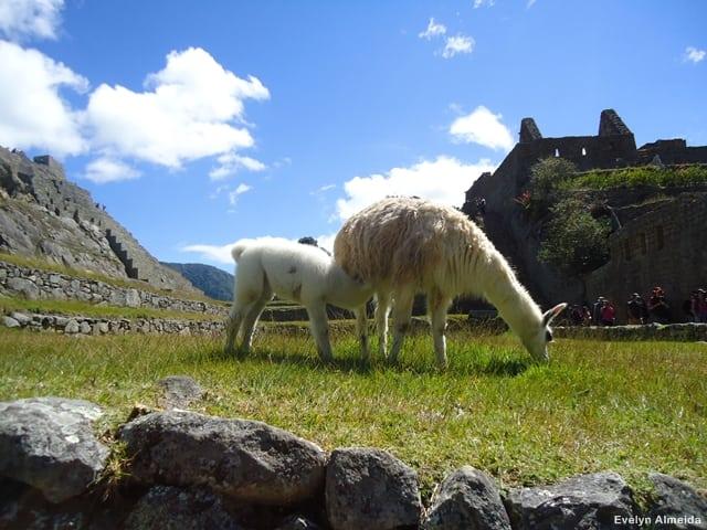 o que ver em Machu Picchu - Dicas de Machu Picchu com criança