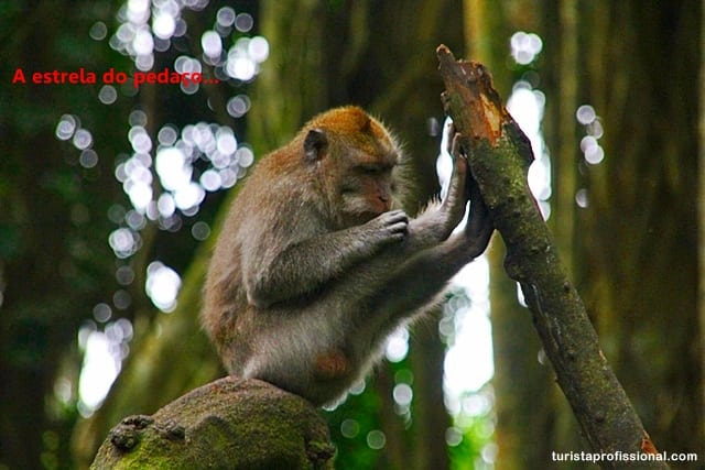 Floresta dos Macacos - Bali