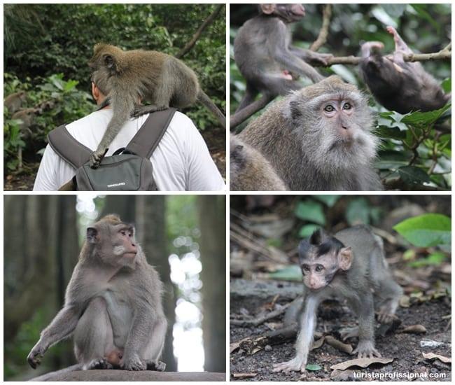 o que ver em Bali - Floresta dos Macacos, em Ubud