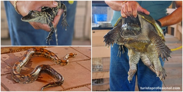 Everglades - Everglades, Flórida: passeando de barco em meio aos crocodilos