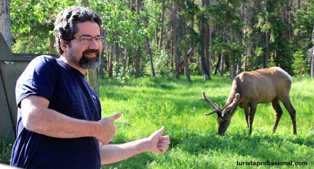 Canadá - A wildlife do Canadá - como ver ursos na natureza