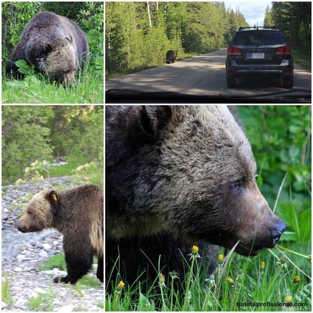 wildlife do Canadá