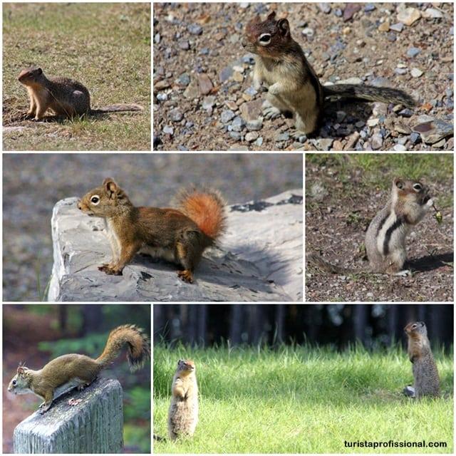 o que fazer2 - A wildlife do Canadá - como ver ursos na natureza