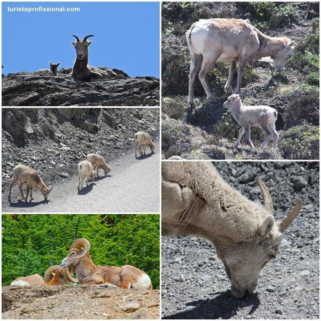 roteiro4 - A wildlife do Canadá - como ver ursos na natureza