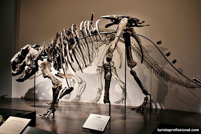dinossauros no canadá - Seguindo os dinossauros do Canadá - Royal Tyrrel Museum