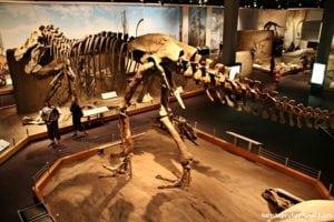 o que fazer no canadá 300x200 - Seguindo os dinossauros do Canadá - Royal Tyrrel Museum