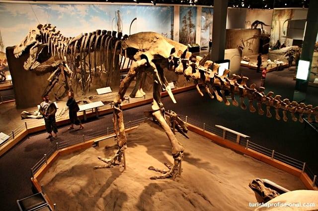 o que fazer no canadá - Seguindo os dinossauros do Canadá - Royal Tyrrel Museum