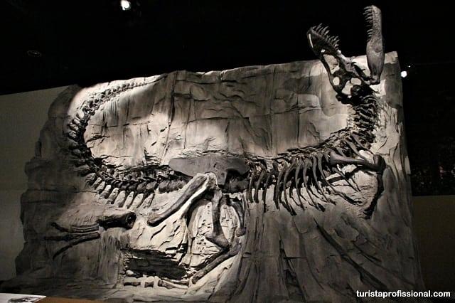 o que ver no canadá1 - Seguindo os dinossauros do Canadá - Royal Tyrrel Museum