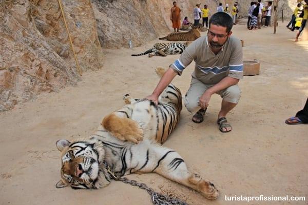 templo dos tigres