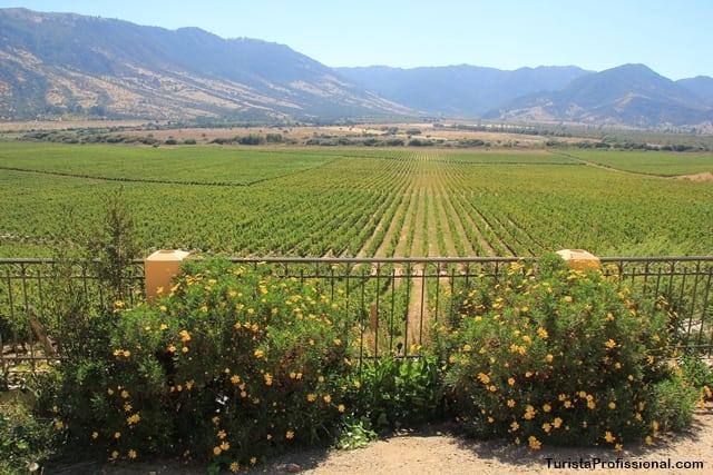 melhores vinhos do Chile